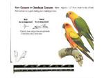 Impressão de modelo de papagaio
